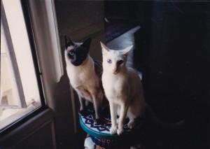 Axel and Algernon